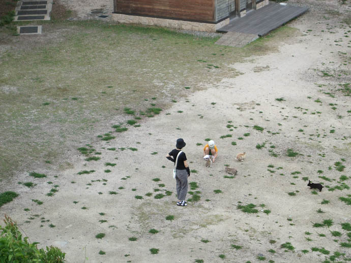later in the day... Evening Feeding -- Okunoshima -- Takehara, Hiroshima Prefecture, Japan -- Copyright 2009 Hiromi