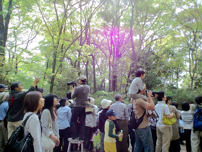 "Working the Crowd me with the ""stabilizing weight"" mentioned in the earlier post . ( photo by Fumie with her cell-phone camera ) -- Shimogamo Shrine -- Kyoto, Japan -- Copyright 2010 Fumie Friedl"