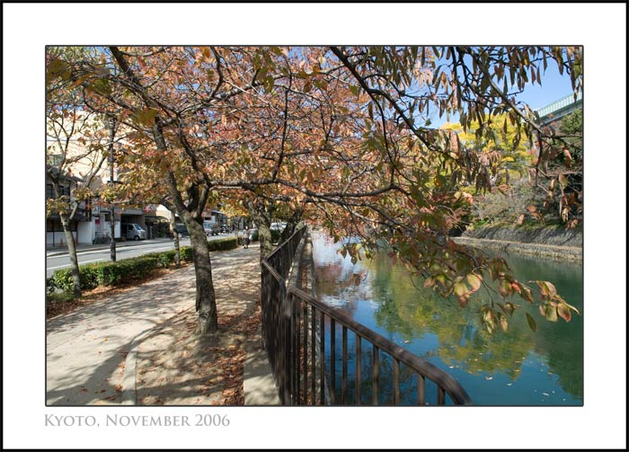 The leaves just starting to turn fall colors, next to the Kyoto Biwako Canal in Okazaki, Kyoto, Japan, November 2006