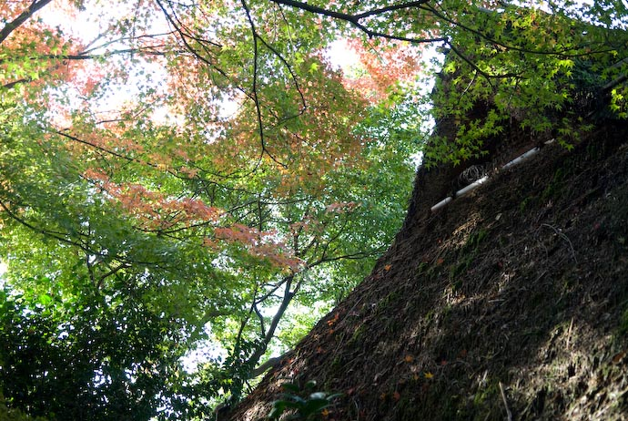 Moss-n-Stuff-Covered Thatched Roof -- Kyoto, Japan -- Copyright 2006 Jeffrey Eric Francis Friedl, http://regex.info/blog/