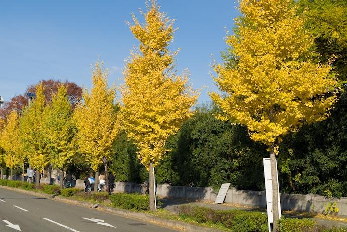 November 24, 2006 — along Kawabata St., Kyoto Japan -- Copyright 2006 Jeffrey Eric Francis Friedl, http://regex.info/blog/