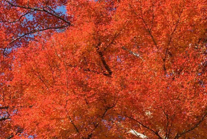 Nikon D200 + Nikkor 17 -55 f/2.8 @ 55mm — 1 / 200 sec, f/9, ISO 320 — map & image data -- Kyoto, Japan -- Copyright 2006 Jeffrey Eric Francis Friedl