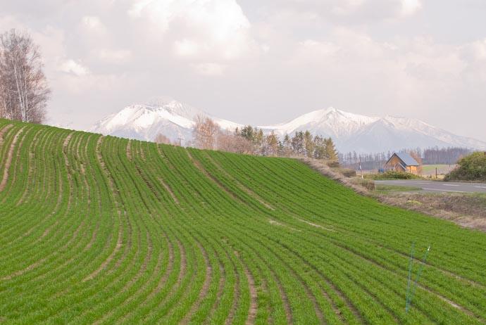 Drunk Farmer -- Biei, Hokkaido, Japan -- Copyright 2007 Jeffrey Eric Francis Friedl, http://regex.info/blog/