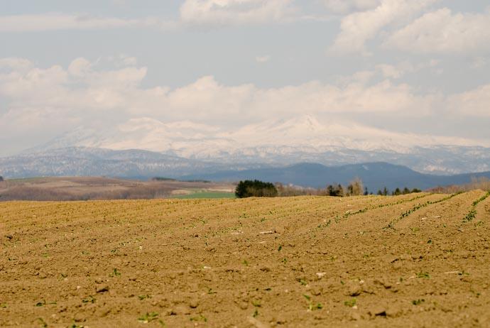 Seedlings -- Biei, Hokkaido, Japan -- Copyright 2007 Jeffrey Eric Francis Friedl, http://regex.info/blog/
