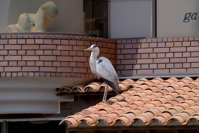 Food Coma -- Kyoto, Japan -- Copyright 2007 Jeffrey Eric Francis Friedl, http://regex.info/blog/
