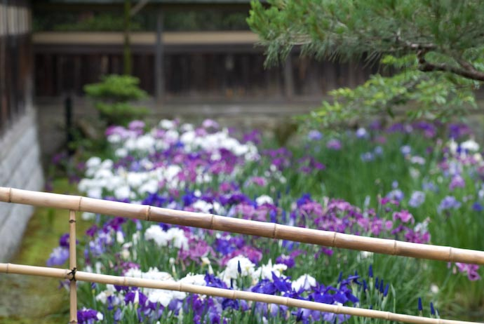 Bamboo and Irises -- Kyoto, Japan -- Copyright 2007 Jeffrey Eric Francis Friedl, http://regex.info/blog/