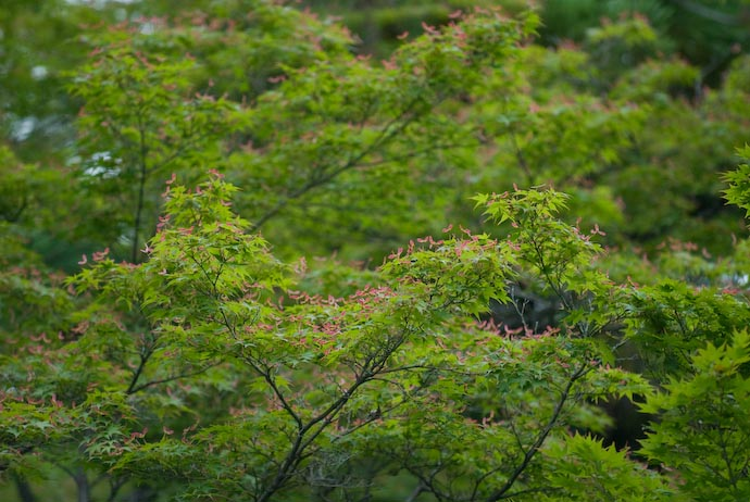 Leaves outside the Hogon'in Temple -- Kyoto, Japan -- Copyright 2007 Jeffrey Eric Francis Friedl, http://regex.info/blog/