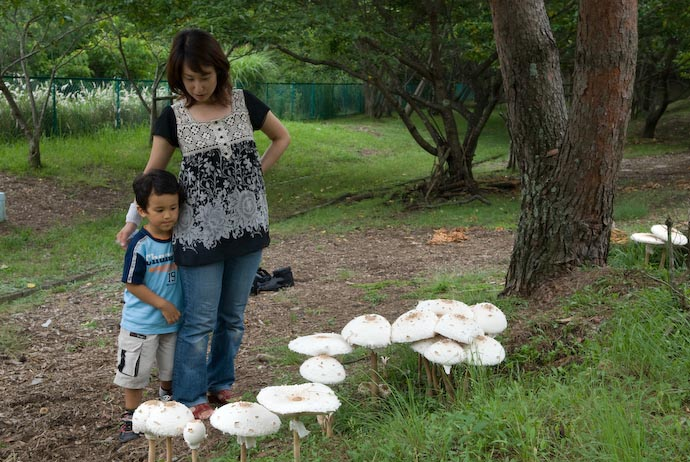 Greg and his Mommy Check Out the Big Mushrooms -- Kyoto, Japan -- Copyright 2007 Jeffrey Eric Francis Friedl, http://regex.info/blog/