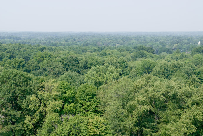 Lots of Trees in Rootstown, Ohio -- Copyright 2007 Jeffrey Eric Francis Friedl
