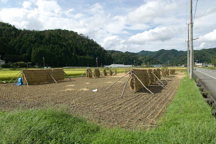 Entire Field -- Kyoto, Japan -- Copyright 2007 Jeffrey Eric Francis Friedl