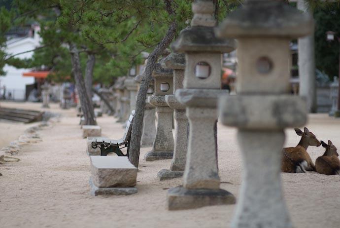 Bench Miyajima, Japan -- Miyajima, Hiroshima, Japan -- Copyright 2007 Jeffrey Eric Francis Friedl