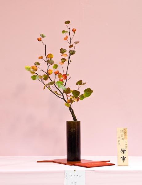 Witch Hazel -- Kyoto, Japan -- Copyright 2007 Jeffrey Eric Francis Friedl