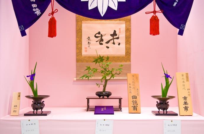 Iris, Maple, and Iris -- Kyoto, Japan -- Copyright 2007 Jeffrey Eric Francis Friedl