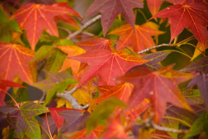 Another Taste of Autumn Kyoto, Japan -- Copyright 2007 Jeffrey Eric Francis Friedl, http://regex.info/blog/