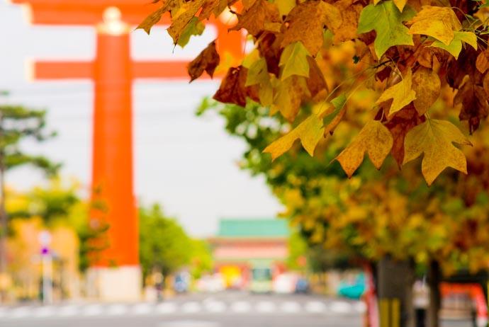 Nikon D200 + Nikkor 85mm f/1.4 — 1 / 640 sec, f/4, ISO 160 — map & image data — nearby photos Leaves, Gate, Shrine -- Kyoto, Japan -- Copyright 2007 Jeffrey Eric Francis Friedl, http://regex.info/blog/