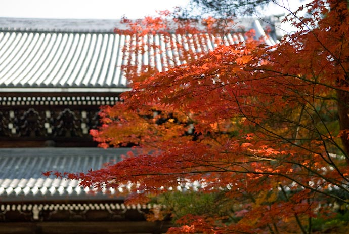 Autumn at the Nanzen Temple -- Kyoto, Japan -- Copyright 2007 Jeffrey Eric Francis Friedl, http://regex.info/blog/