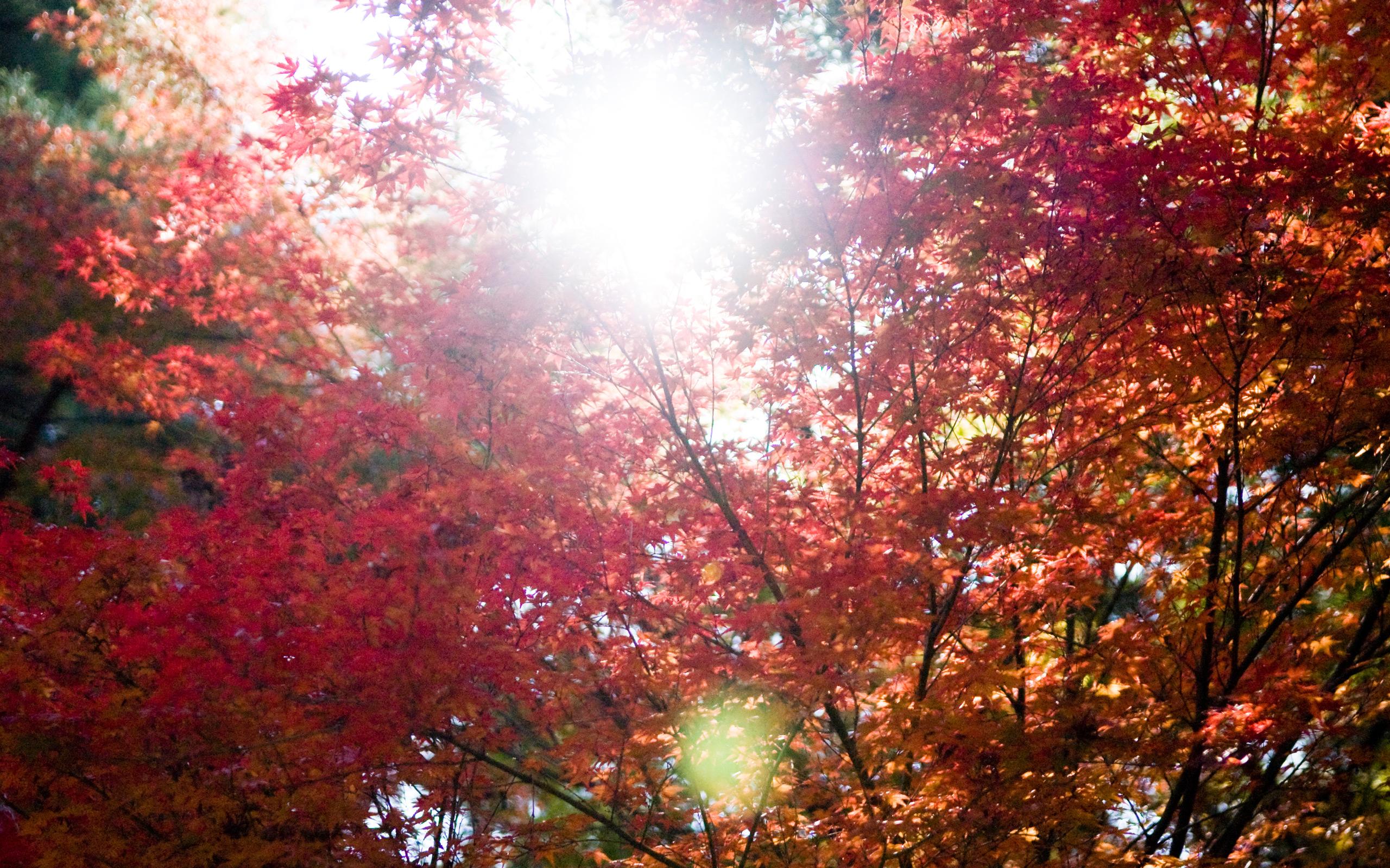 jeffrey friedl s blog bonanza of fall foliage desktop backgrounds