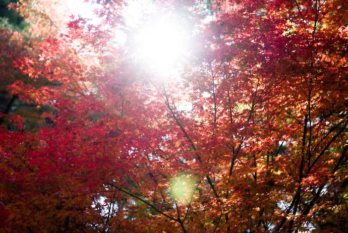 desktop background image of sun streaming through a canopy of firey red and orange colors of fall foliage at the Nanzen Temple, Kyoto Japan -- Canopy of Color -- Copyright 2007 Jeffrey Eric Francis Friedl, http://regex.info/blog/