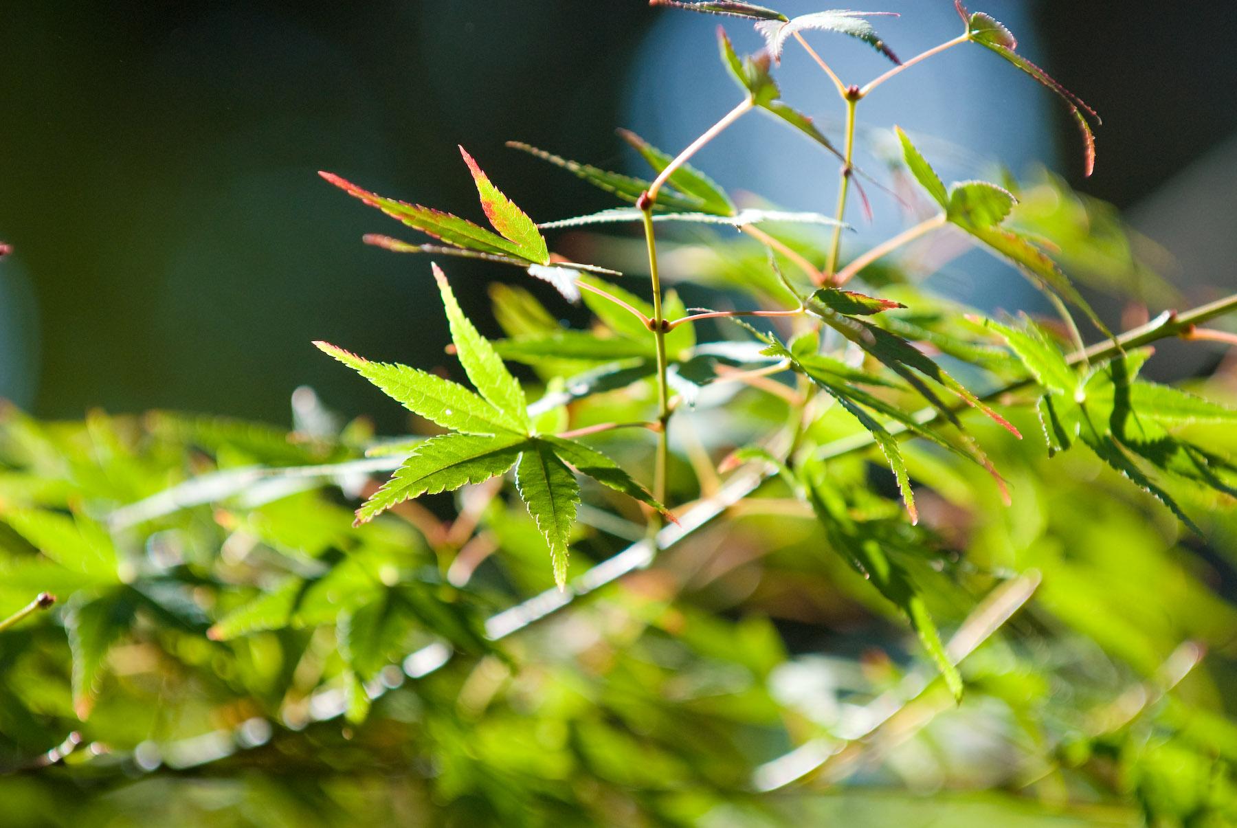 Jeffrey Friedl\'s Blog » Bonanza of Fall-Foliage Desktop Backgrounds