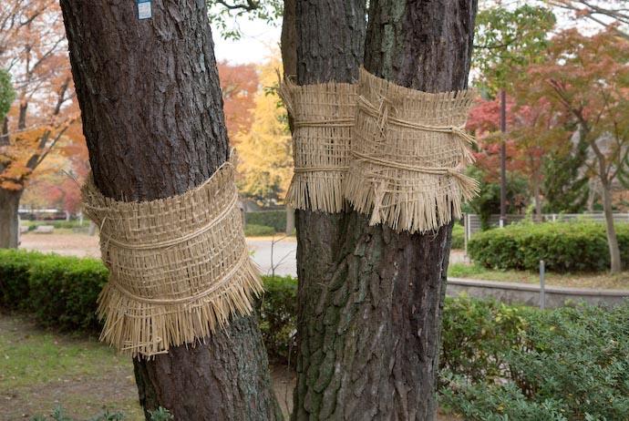 Tree Snuggies -- Kyoto, Japan -- Copyright 2007 Jeffrey Eric Francis Friedl, http://regex.info/blog/