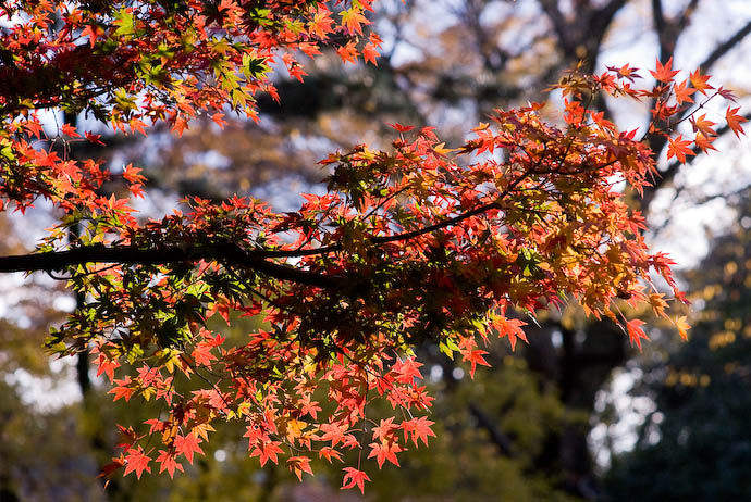 Sun, and a Cornucopia of Colors -- The grounds of the old Kyoto Imperial Palace (Kyoto Gyosho) -- Kyoto, Japan -- Copyright 2007 Jeffrey Eric Francis Friedl, http://regex.info/blog/