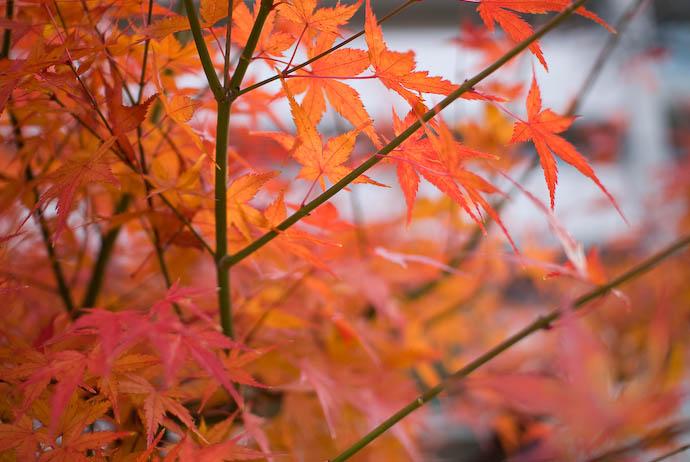 Soft Orange -- Kyoto, Japan -- Copyright 2007 Jeffrey Eric Francis Friedl, http://regex.info/blog/