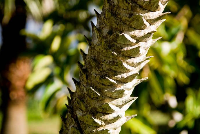 Palm-Tree Trunk -- Kakeromajima (Amami), Kagoshima, Japan -- Copyright 2008 Jeffrey Eric Francis Friedl, http://regex.info/blog/