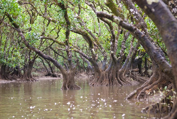 Mangroves on Amami Ooshima -- Amami Ooshima, Kagoshima, Japan -- Copyright 2008 Jeffrey Eric Francis Friedl, http://regex.info/blog/