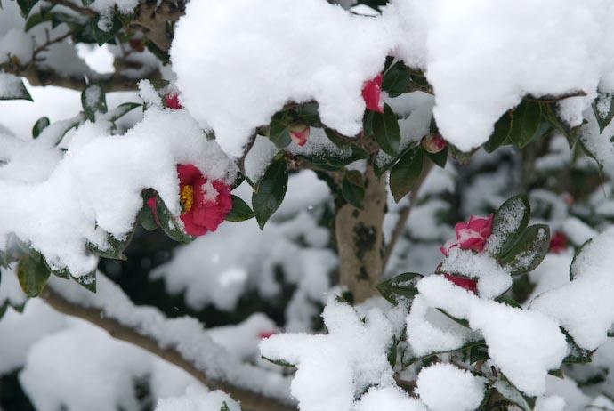 Chilled Flowers -- Kyoto, Japan -- Copyright 2008 Jeffrey Eric Francis Friedl, http://regex.info/blog/