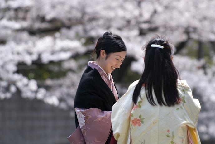 Sakura Chimping -- Kyoto, Japan -- Copyright 2008 Jeffrey Eric Francis Friedl