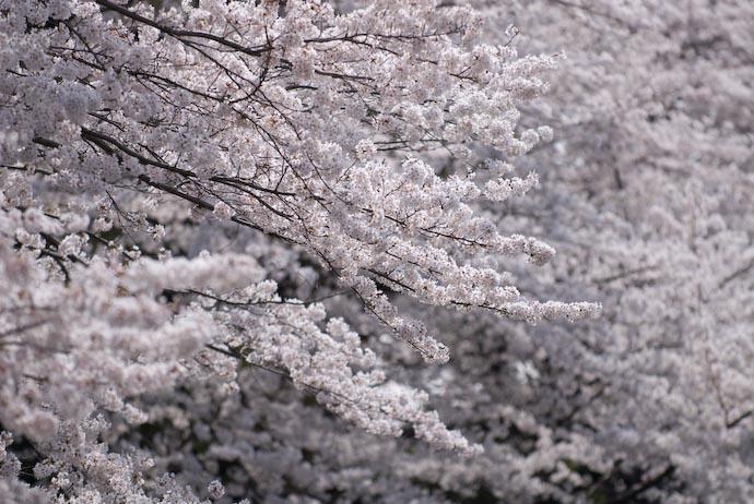 Lotsa' White -- Kyoto, Japan -- Copyright 2008 Jeffrey Eric Francis Friedl