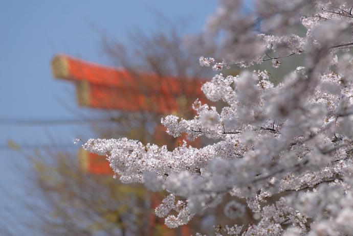 Gate and Sakura -- Kyoto, Japan -- Copyright 2008 Jeffrey Eric Francis Friedl
