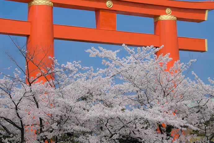 Obligatory Shrine Gate -- Kyoto, Japan -- Copyright 2008 Jeffrey Eric Francis Friedl