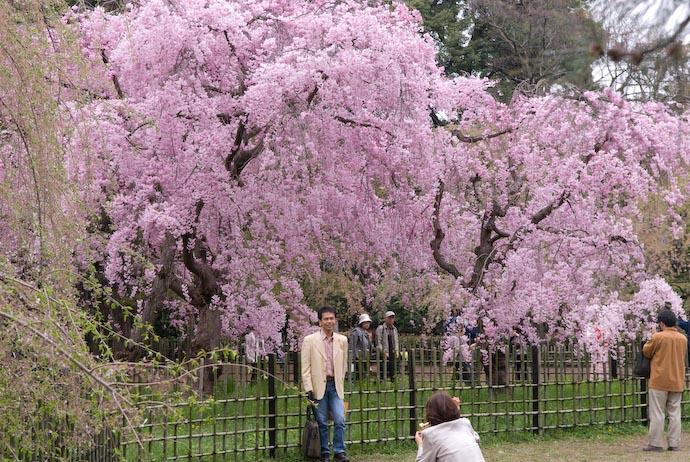 Photo Op -- Kyoto, Japan -- Copyright 2008 Jeffrey Eric Francis Friedl, http://regex.info/blog/