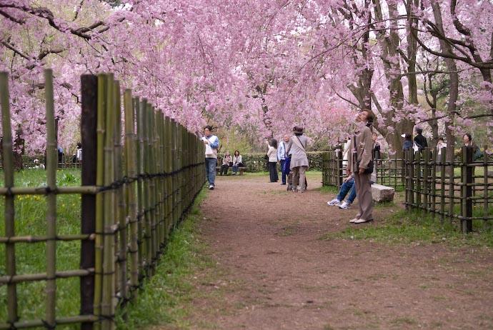 Typical Scene #2 -- Kyoto, Japan -- Copyright 2008 Jeffrey Eric Francis Friedl, http://regex.info/blog/