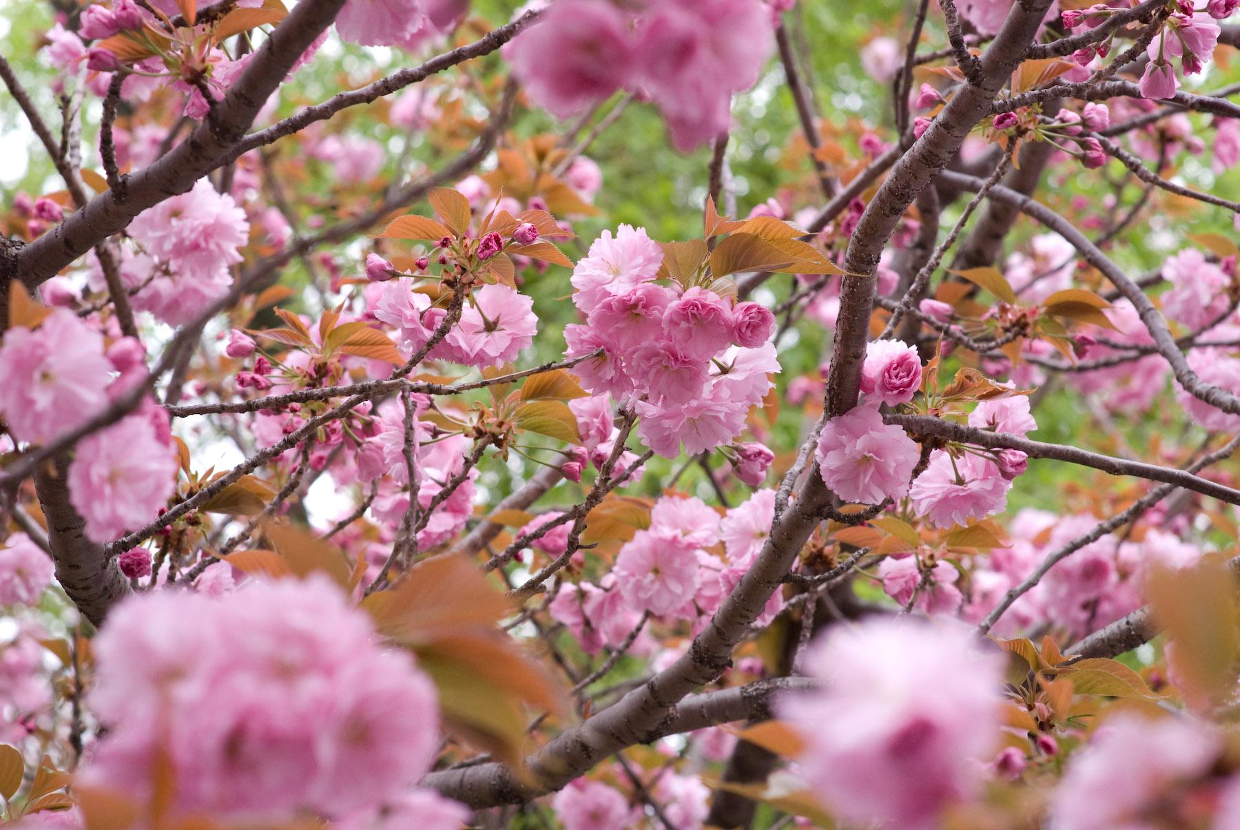 Jeffrey Friedl S Blog Fluffy Pink A Big Gray Bird And