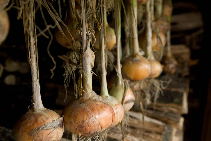 Onions -- Takashima, Shiga, Japan -- Copyright 2008 Jeffrey Eric Francis Friedl