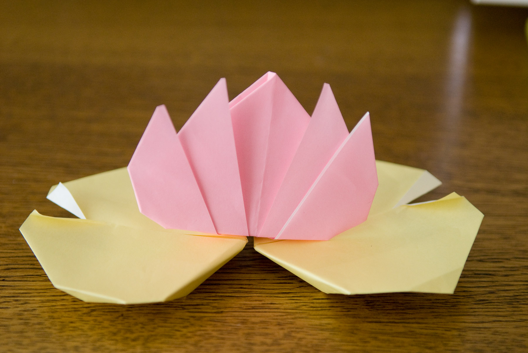 Origami Water Lily Made By Five Year Old Anthony Kyoto Japan