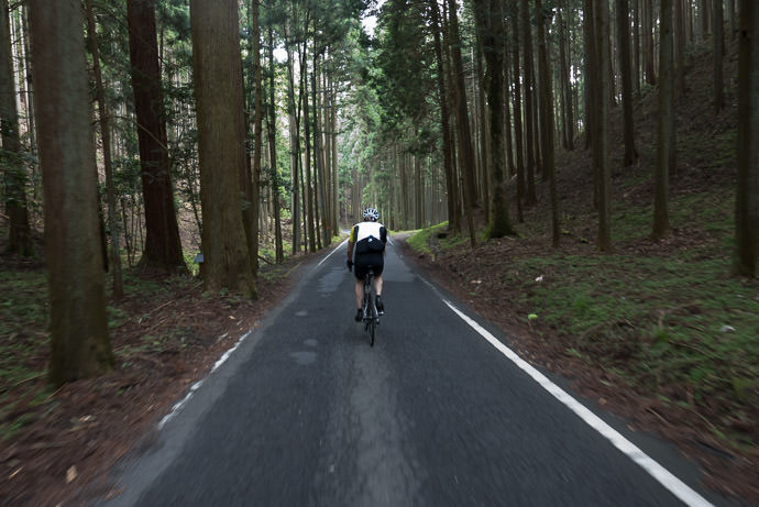 Re-Entering the Forest for the most lovely downhill segment I've seen yet 8:56 AM (+2h 33m) - 33 km (20.5 miles) taken while cycling at 18 kph (11 mph) -- Nantan, Kyoto, Japan -- Copyright 2015 Jeffrey Friedl, http://regex.info/blog/