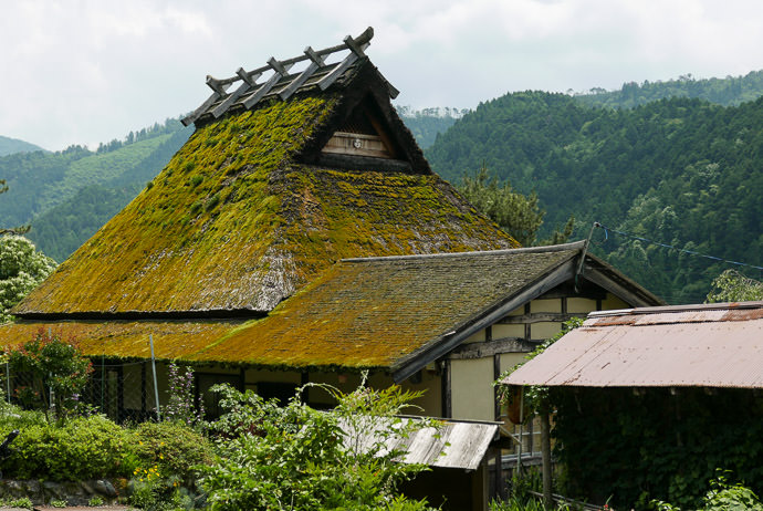 Thatch with Thick Moss Layer across from the cafe -- Miyama -- Nantan, Kyoto, Japan -- Copyright 2015 Jeffrey Friedl, http://regex.info/blog/ -- This photo is licensed to the public under the Creative Commons Attribution-NonCommercial 4.0 International License http://creativecommons.org/licenses/by-nc/4.0/ (non-commercial use is freely allowed if proper attribution is given, including a link back to this page on http://regex.info/ when used online)