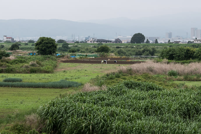 Small-Plot Farming individuals making use of the fertile flood plain between the path and the river 7:58 AM (+29 min) - 12 km (7.2 miles) taken while cycling at 33 kph (21 mph) -- Kyoto, Japan -- Copyright 2015 Jeffrey Friedl, http://regex.info/blog/