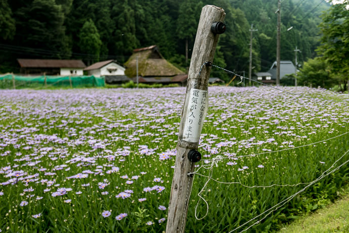 """ Fence is Electrified at Night "" for keeping critters out -- Kyoto, Japan -- Copyright 2015 Jeffrey Friedl, http://regex.info/blog/"