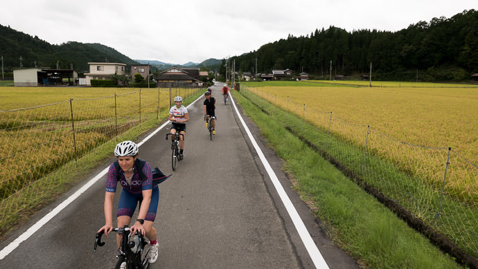 On The Road Again taken while cycling at 22 kph (14 mph) -- Kyoto, Japan -- Copyright 2015 Jeffrey Friedl, http://regex.info/blog/