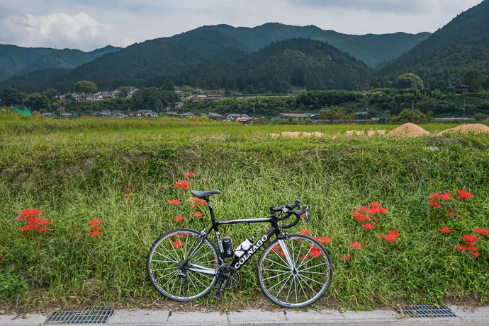 Michael's Bike -- Kyoto, Japan -- Copyright 2015 Jeffrey Friedl, http://regex.info/blog/