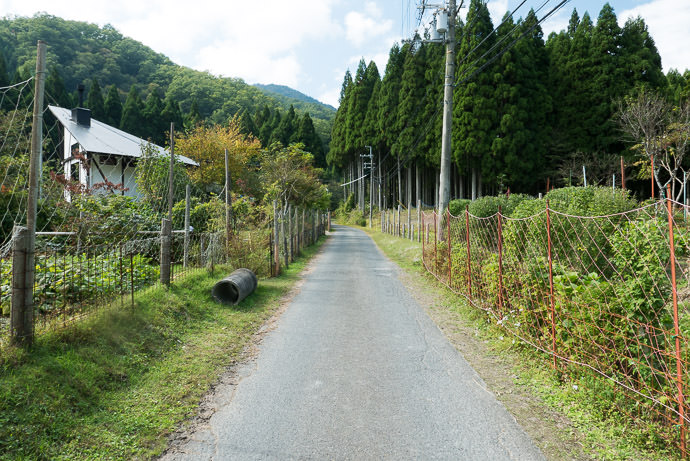 Fenced Off to keep animals out of their gardens -- Takashima, Shiga, Japan -- Copyright 2015 Jeffrey Friedl, http://regex.info/blog/ -- This photo is licensed to the public under the Creative Commons Attribution-NonCommercial 4.0 International License http://creativecommons.org/licenses/by-nc/4.0/ (non-commercial use is freely allowed if proper attribution is given, including a link back to this page on http://regex.info/ when used online)
