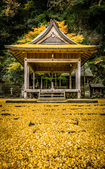 desktop background image of a fall-foliage scene in Kyoto, Japan -- Iwato Ochiba Shrine (岩戸落葉神社) -- Copyright 2015 Jeffrey Friedl, http://regex.info/blog/ -- This photo is licensed to the public under the Creative Commons Attribution-NonCommercial 4.0 International License http://creativecommons.org/licenses/by-nc/4.0/ (non-commercial use is freely allowed if proper attribution is given, including a link back to this page on http://regex.info/ when used online)