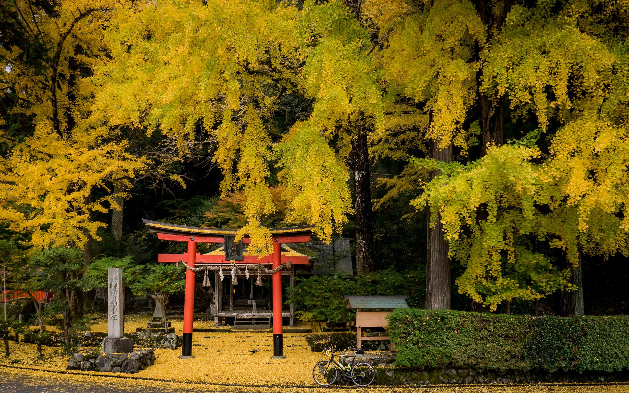 jeffrey friedl u0027s blog cycling to kyoto u0027s ochiba shrine amid the