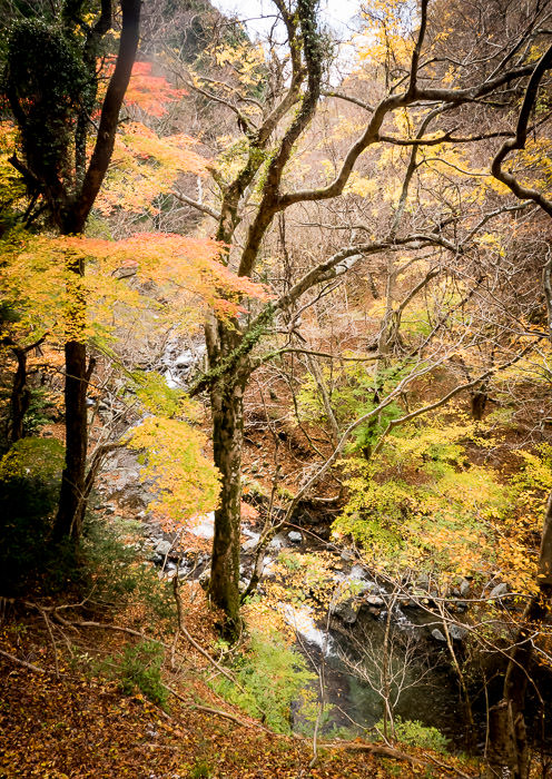 Deep deep gorge, deep colors.... sadly, doesn't come across well in the photo -- Kyoto, Japan -- Copyright 2015 Jeffrey Friedl, http://regex.info/blog/