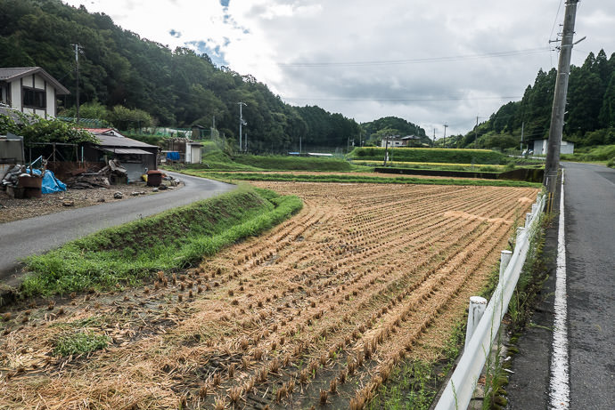 Across the Street harvest likely just finished -- Otsu, Shiga, Japan -- Copyright 2016 Jeffrey Friedl, http://regex.info/blog/