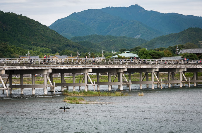Bird and Bridge more-traditional view of the Togetsukyo bridge -- Kyoto, Japan -- Copyright 2016 Jeffrey Friedl, http://regex.info/blog/ -- This photo is licensed to the public under the Creative Commons Attribution-NonCommercial 4.0 International License http://creativecommons.org/licenses/by-nc/4.0/ (non-commercial use is freely allowed if proper attribution is given, including a link back to this page on http://regex.info/ when used online)